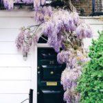 Old english lavender water d.r.harris для мужчин
