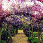 Lavender & coriander jo malone london для мужчин и женщин