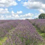 English lavender atkinsons для мужчин и женщин