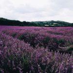 Lavender on the rocks atkinsons для мужчин и женщин
